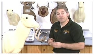 Intro to Deer Taxidermy