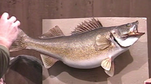 Walleye Master Series