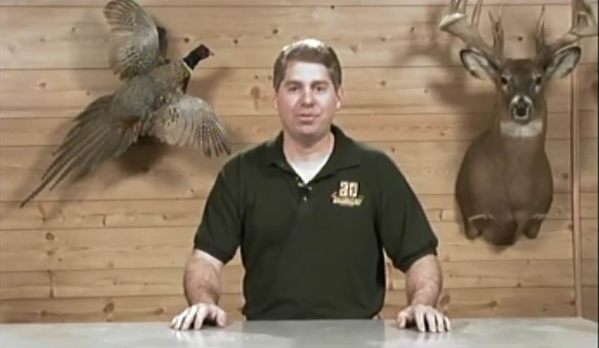 In studio pheasant taxidermy introductory
